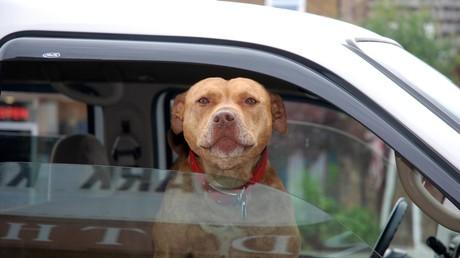 Kein Happyend: Tierretter bringen verlorene Hündin heim – Besitzerin gibt sie auf (Symbolbild)