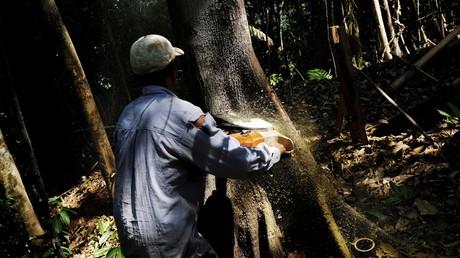Abholzung des Amazonas-Regenwaldes legt zu (Symbolbild)