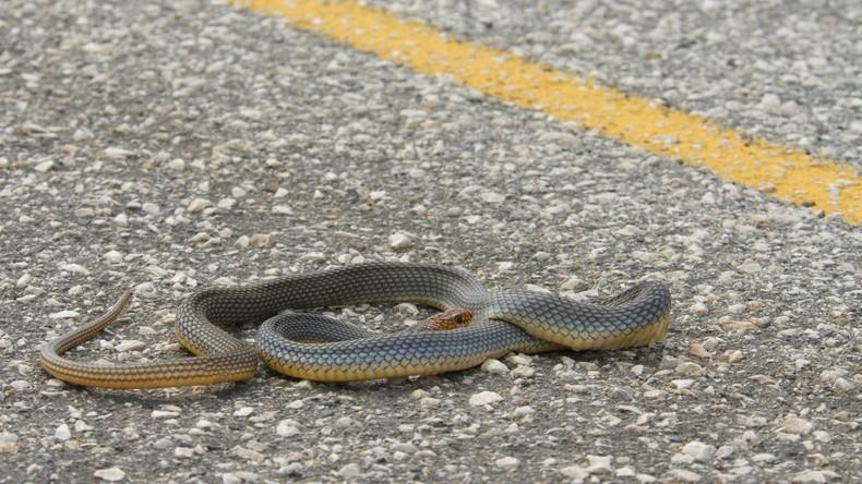 Gefährlicher Müll: Frau rettet Schlange aus Bierdose - trotz Gefahr für das eigene Leben