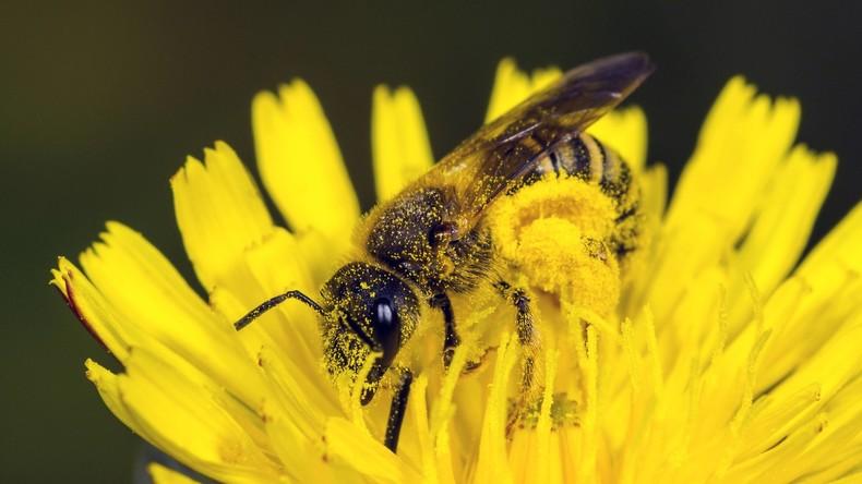 Taiwan: Ärzte ziehen vier lebende Bienen aus dem Auge einer Frau
