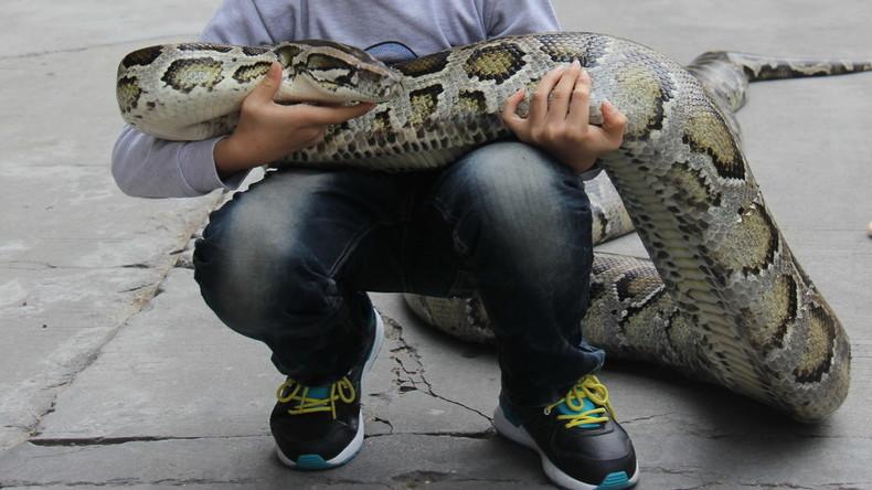 Kleinkind versucht sich als Tierärztin – Python billigt Behandlung mit Wattestäbchen