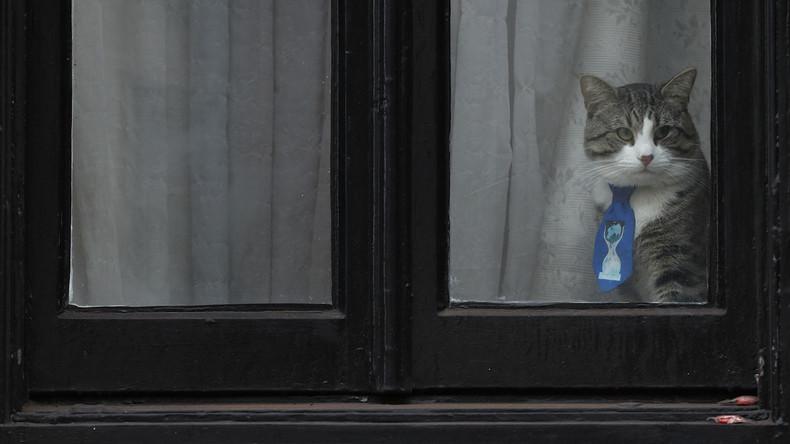 WikiLeaks zeigt Julian Assanges Kater: Stubentiger in Sicherheit, aber unter Spionageverdacht
