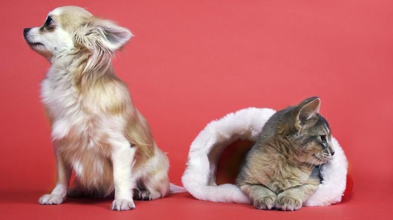 Neue Studie: Hundehalter noch glücklicher als Katzenbesitzer