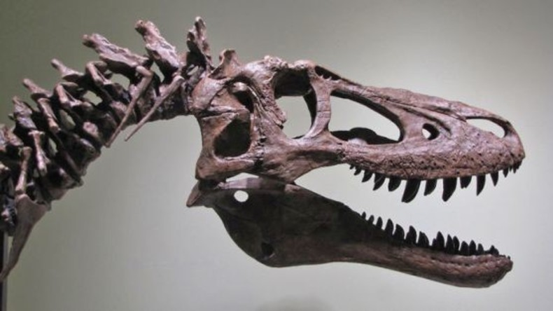 Fossilienjäger bietet Skelett-Teile von T-Rex für fast drei Millionen Dollar auf eBay zum Verkauf an