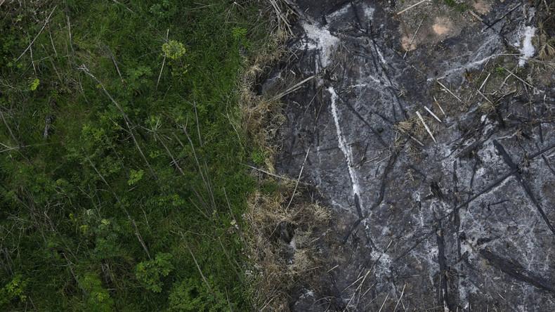 """Neue Studie: Weltweit zwölf Millionen Hektar Tropenwald """"verschwunden"""""""