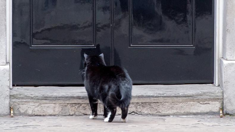 Feine Katzen kommen früh und klingeln: Szene an Haustür landet Hit auf Facebook