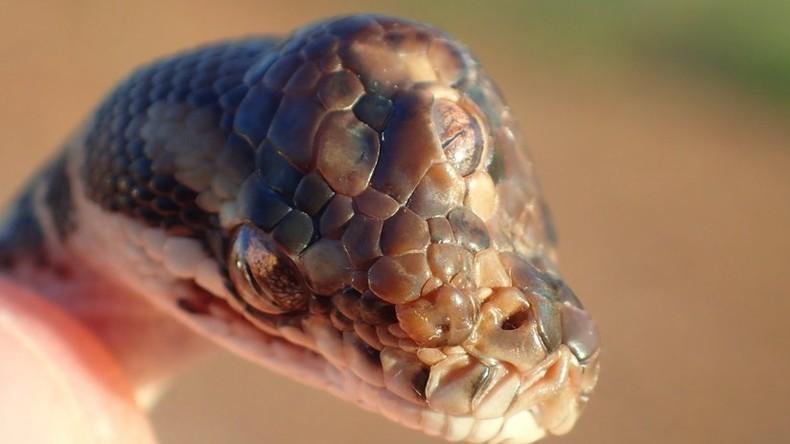 Australische Parkaufseher entdecken Schlange mit drei Augen