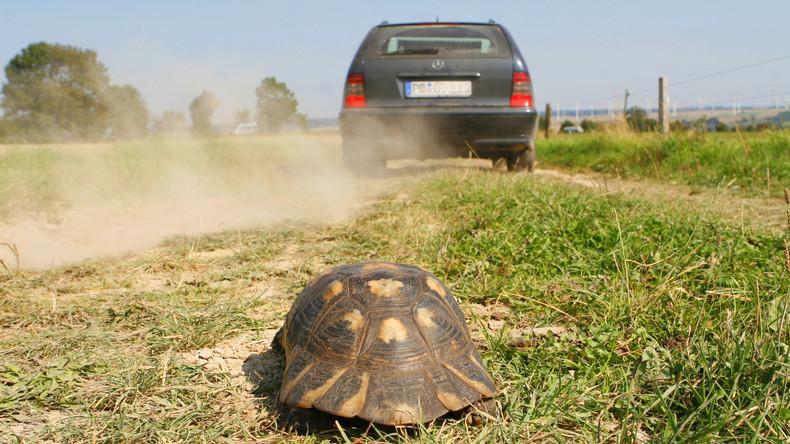 Skurriler Verkehrsunfall in USA: Hochgeschleuderte Schildkröte zerbricht Windschutzscheibe