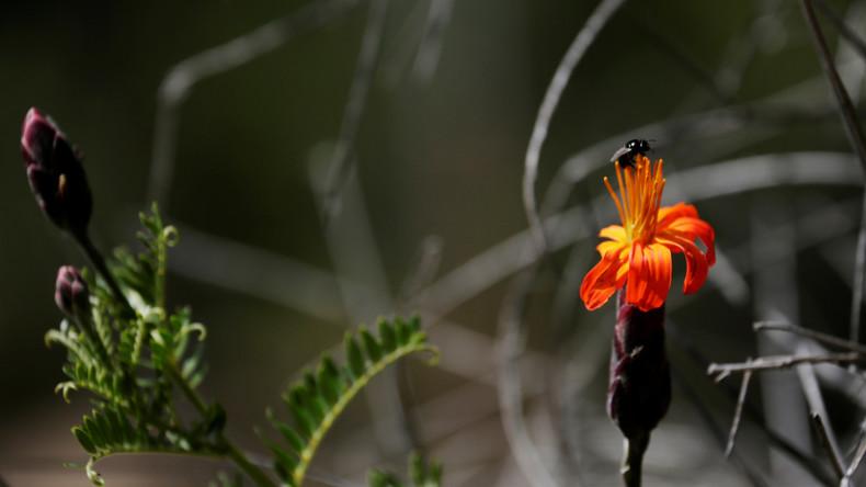 Weltbericht zu Biodiversität: Menschheit tilgt die Natur von der Erde