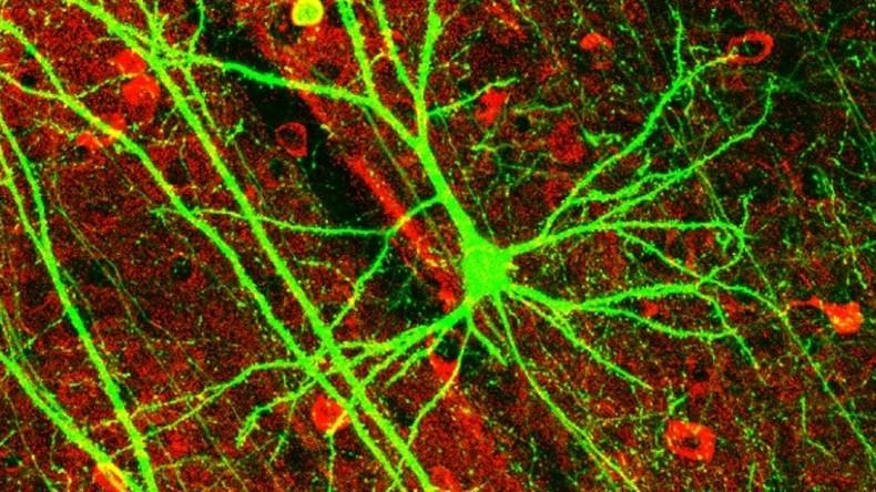 Versuchskaninchen Kinder: Neuromarketing als orangefarbene Revolution