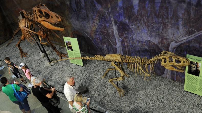Russland: Paläontologen finden in Jakutien 130 Millionen Jahre alte Dinosaurier-Fossilien