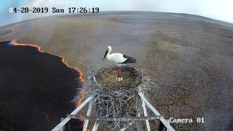 Überwachungskamera bei seltenem Storchennest erfasst Buschfeuer in russischer Region Amur