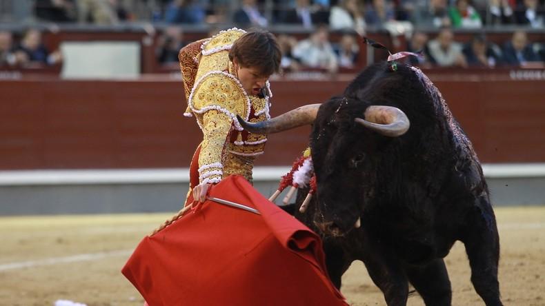 Bulle spießt Torero auf - Horn dringt durch Gesäßfalte ein