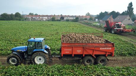 Ein Zuckerrübenbauer während der Ernte im Ort, Godewaersvelde, im Département Nord in der Region Hauts-de-France.