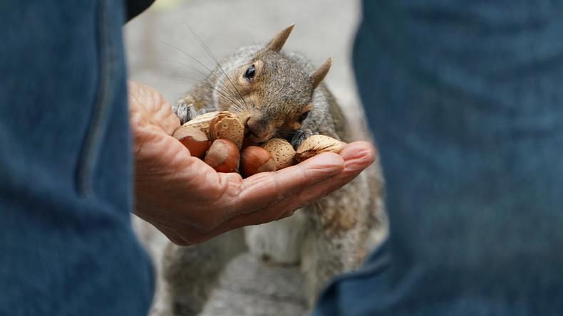 Genau 2.373 Eichhörnchen: Aktivisten zählen Nagetiere im New Yorker Central Park