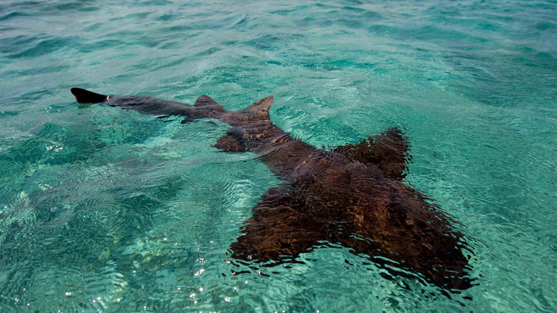 Vor den Augen ihrer Eltern: 21-Jährige stirbt bei Haiangriff auf den Bahamas
