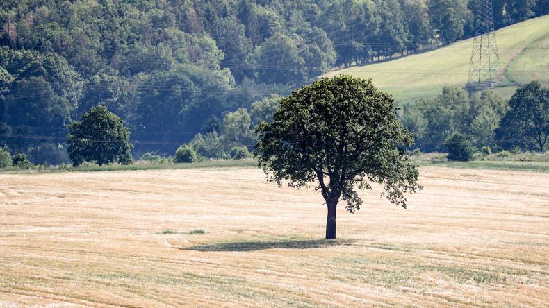 Hitzewelle adé – aber Waldbrandgefahr bleibt bestehen