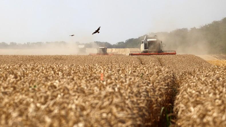 Russland verlängert Zollfreiheit auf Weizenexporte – Produktion boomt weiterhin