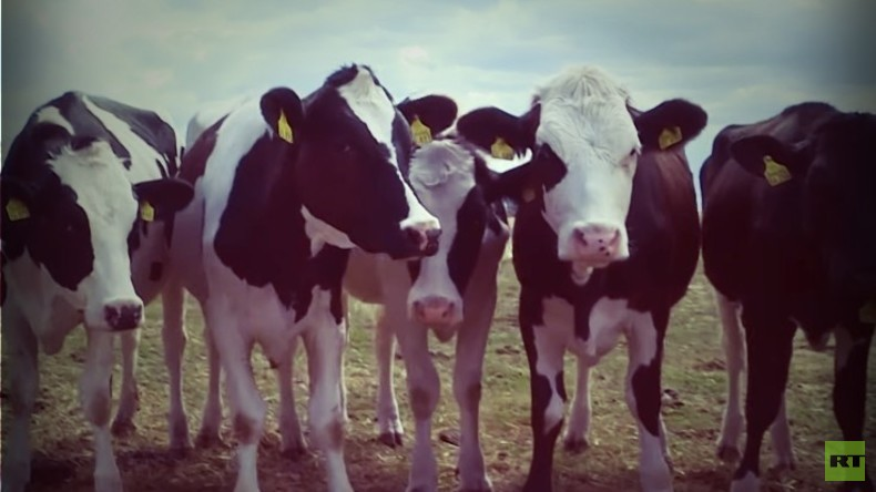 Futter wird knapp: Landwirte leiden unter der Trockenheit (Video)