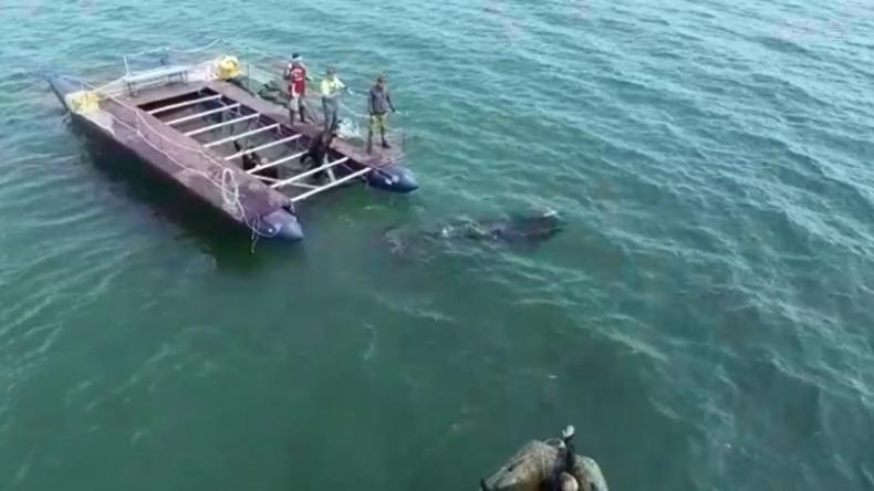 """Berüchtigtes """"Walgefängnis"""" – Drei weitere Schwertwale in Russland in die Freiheit entlassen"""