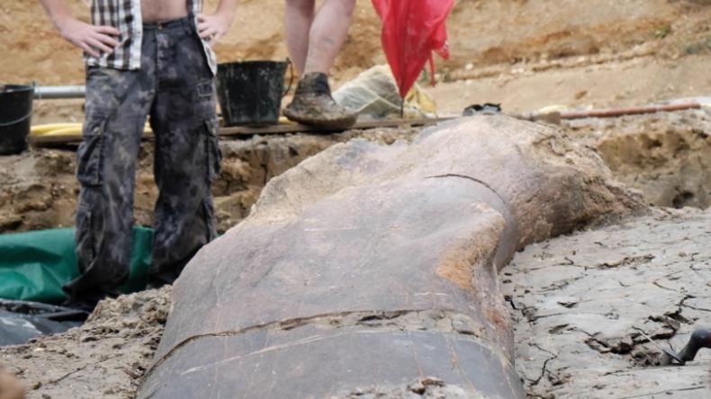 Frankreich: Paläontologen entdecken riesigen 140 Millionen Jahre alten Dinosaurierknochen