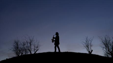 Eine kleine Kuhmusik: Angehender Saxophon-Spieler begeistert Rinderherde und Twitter-Nutzer (Symbolbild)