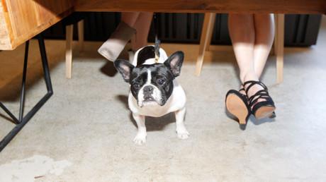 (Symbolbild). Ein Hundeleben im Büro?