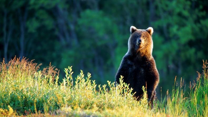 Wildes Russland: Pilzjägerin versinkt bis zum Bauch im Sumpf und hält Bären lautstark auf Distanz