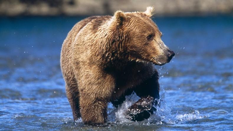 So ein Zirkus: Bär planscht direkt neben Badegästen im Fluss