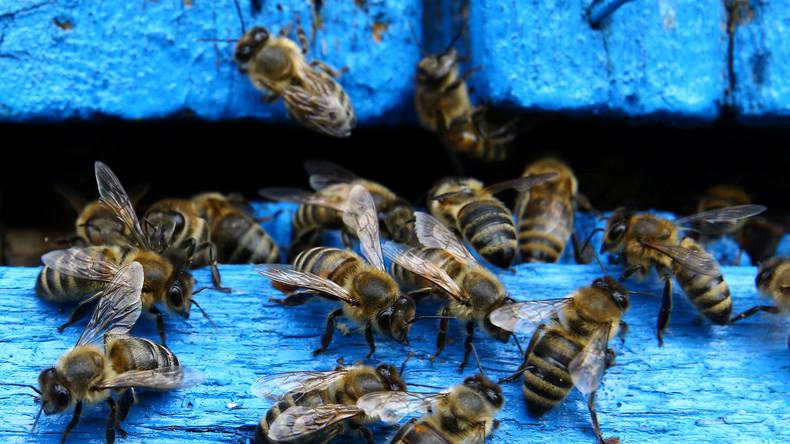 Massensterben in Brasilien: Pestizide töten mehr als eine halbe Milliarde Bienen in drei Monaten
