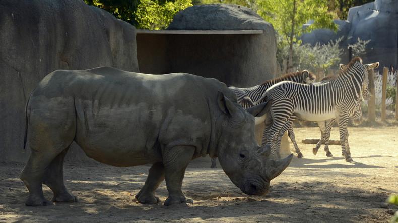 Zoobesucher bekritzeln Nashorn und bringen Öffentlichkeit gegen sich auf