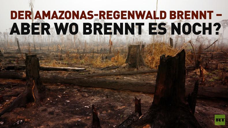 Der Amazonas-Regenwald brennt – aber wo brennt es noch?