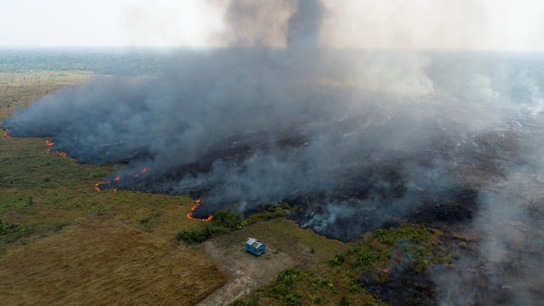 Brasilien: Die Finanzinteressen hinter dem Amazonas-Feuer (Video)