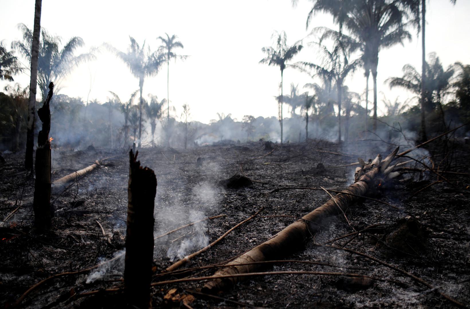 Katastrophe mit Ansage: Brände im Amazonas könnten globale Konsequenzen haben