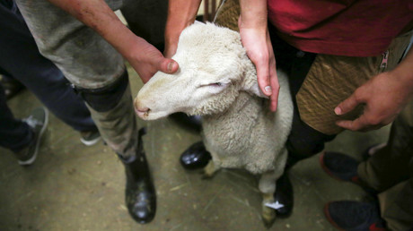 Slavoj Žižek zum Verbot ritueller Schlachtungen in Belgien: