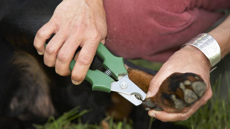 Oscarreifer Auftritt: Hund simuliert Ohnmacht aus Widerwillen gegen Krallenschneiden