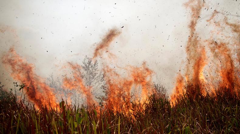 Die Brände im Amazonas-Regenwald: Was hinter den Schlagzeilen der Klimakatastrophe steckt