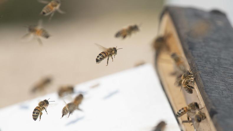Indien: Bienenschwarm auf Cockpitscheibe sorgt für dreistündige Flugverspätung