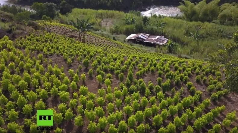 Die Kokafalle: Über den Kampf kolumbianischer Kokabauern um legale Anbau-Alternativen (Video-Doku)