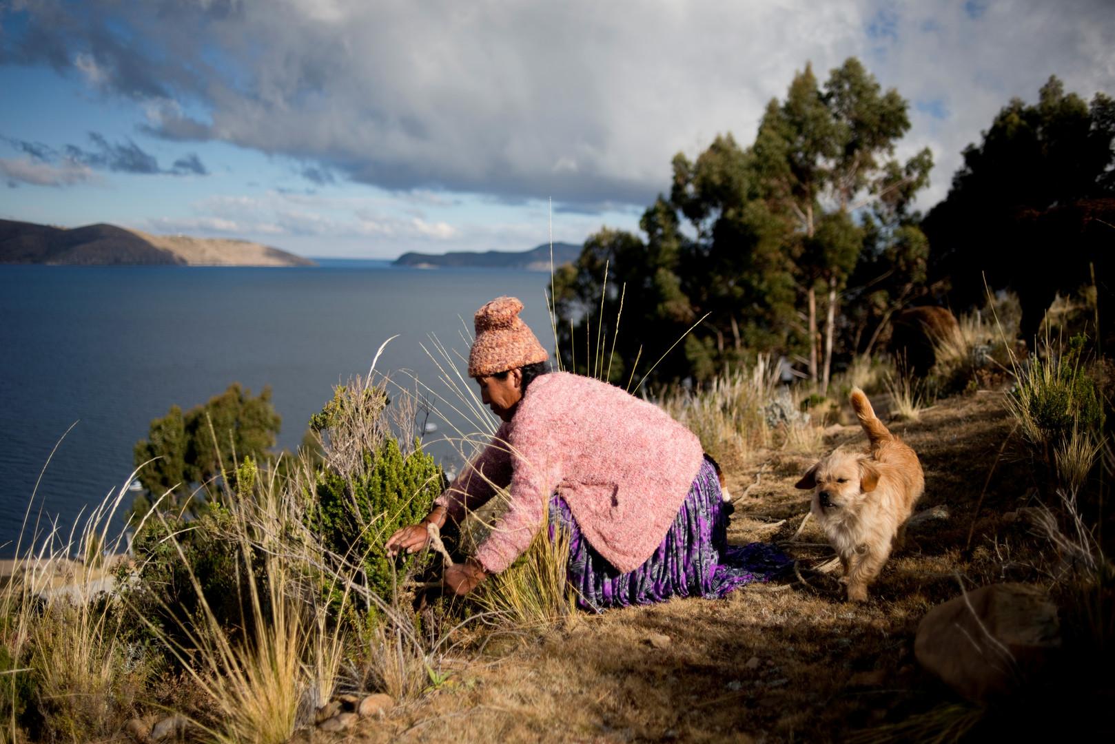 Frau fesselt ihr Vieh am Rande der Insel Koati am Titicacasee