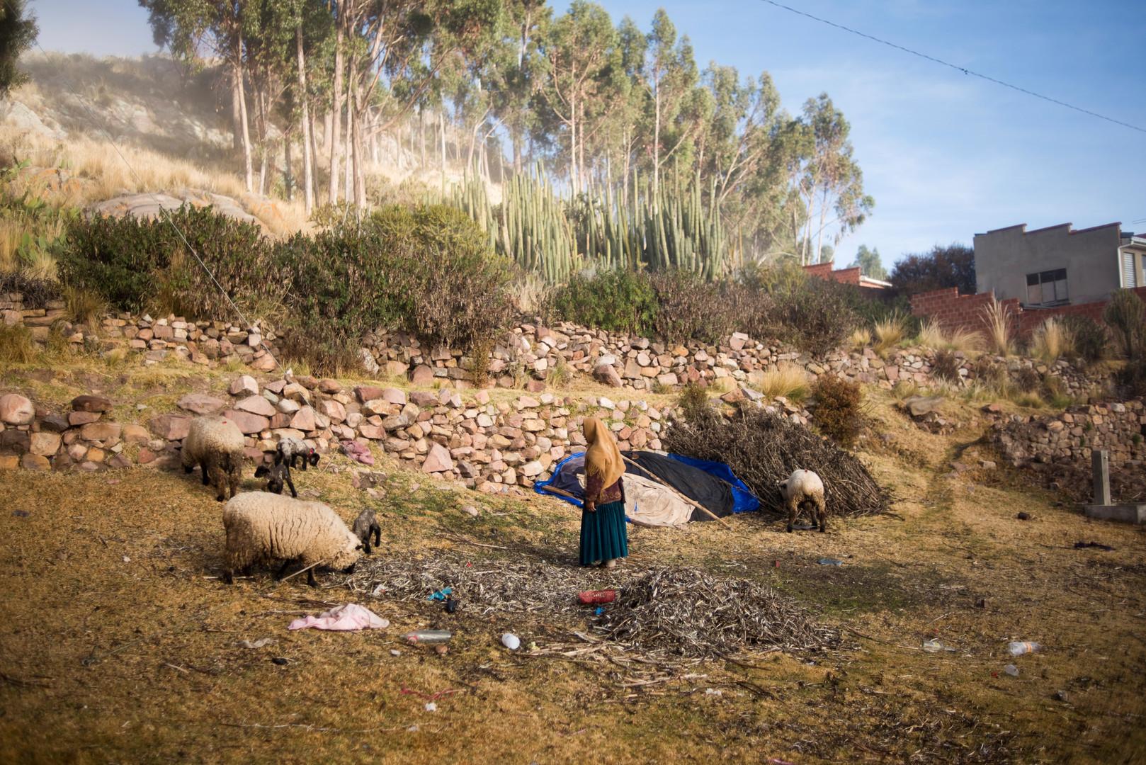 Frau füttert ihr Vieh im Dorf Qewaya in Bolivien