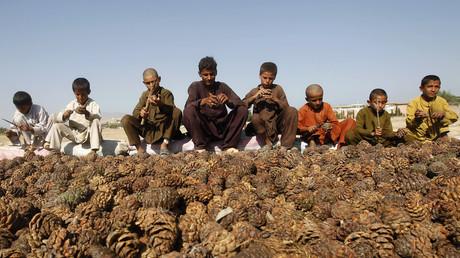 Kinder und Jugendliche bei der Pinienernte in der ostafghanischen Provinz Nangarhar (Bild vom 10.10.2012)