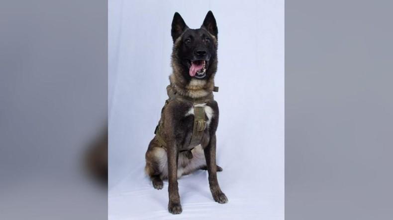 """Trump veröffentlicht Foto des Hundes, der IS-Anführer Baghdadi """"in die Ecke trieb"""""""