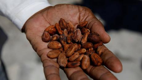 Symbolbild: Kakaobohnen, Caruao, Venezuela, 24. Oktober 2017