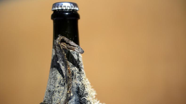 Taucher bergen 900 Flaschen mit edlen Spirituosen nach 100 Jahren auf Meeresgrund