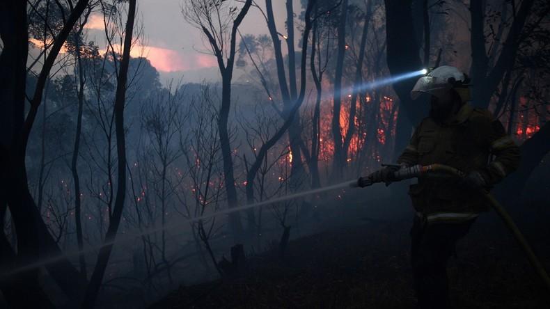 Buschbrände in Australien Mehrere Tote mehr als 100 Häuser und Koala Lebensraum zerstört