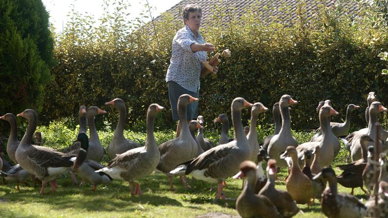 """""""Die Enten haben gewonnen"""": Gericht in Frankreich weist Klage wegen Lärmbelästigung ab"""