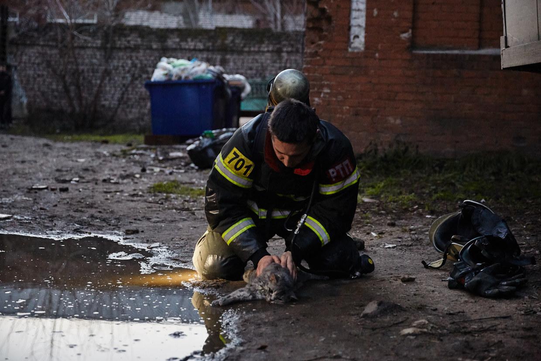 Niemand bleibt zurück: Feuerwehrmann rettet Katze nach Rauchvergiftung vor dem Tod