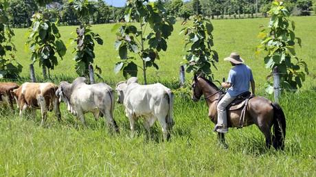 Archivbild: Ein Bauer mit seinen Rindern in der kolumbianischen Provinz Meta (Vista Hermosa, 21. April 2011)
