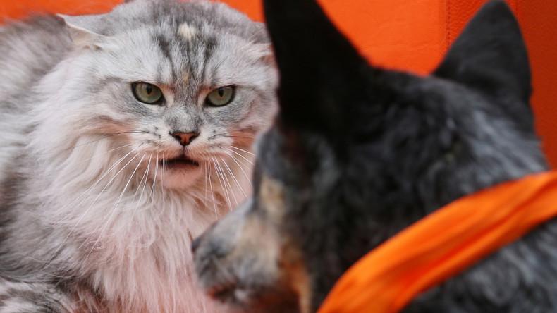 Bitte lächeln: Britin versammelt nach mehreren Versuchen ihre 17 Heimtiere für Familienfoto